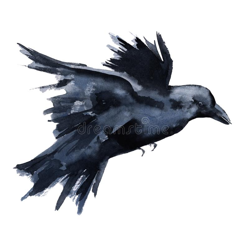 Corvo preto Isolado no fundo branco ilustração stock