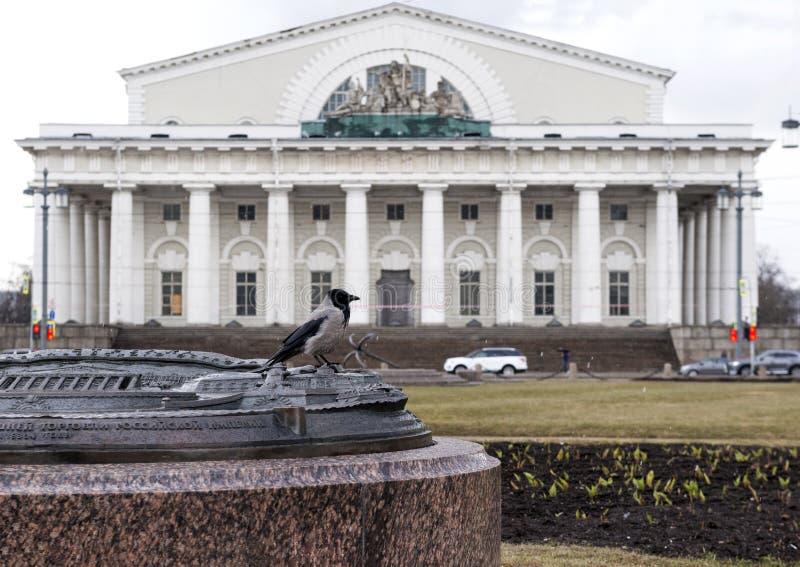 Corvo que senta-se em uma pedra na frente da construção de troca em St Petersburg em um dia chuvoso fotos de stock royalty free