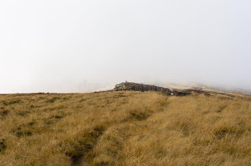 Corvus auf einem Felsen Ein Gebirgsvogel Schwarzer Rabe in den Bergen stockfoto