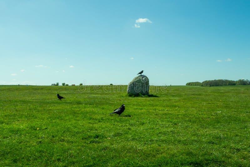 Corvusfrugilegus - de raven en de kraaien van Stonehenge royalty-vrije stock fotografie
