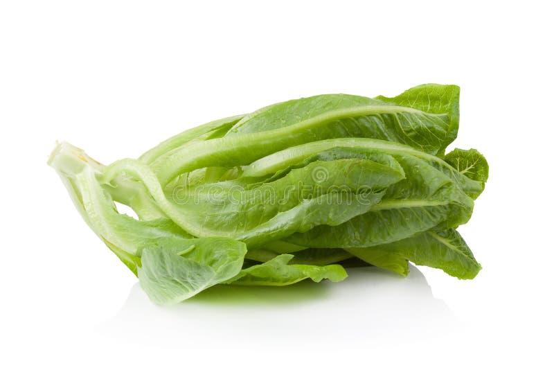 Download Cos Lettuce Ha Isolato Su Fondo Bianco Fotografia Stock - Immagine di alimento, pasto: 56876092