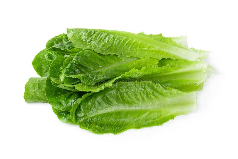 Cos Lettuce Isolated sobre o fundo branco fotografia de stock