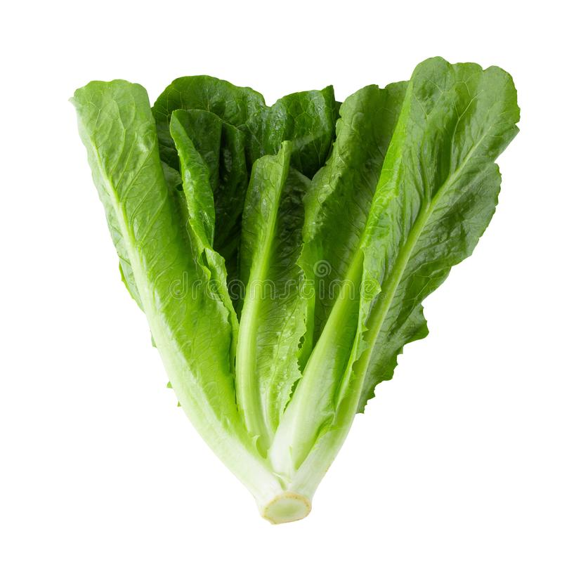 Cos Lettuce Isolated sobre o fundo branco imagens de stock
