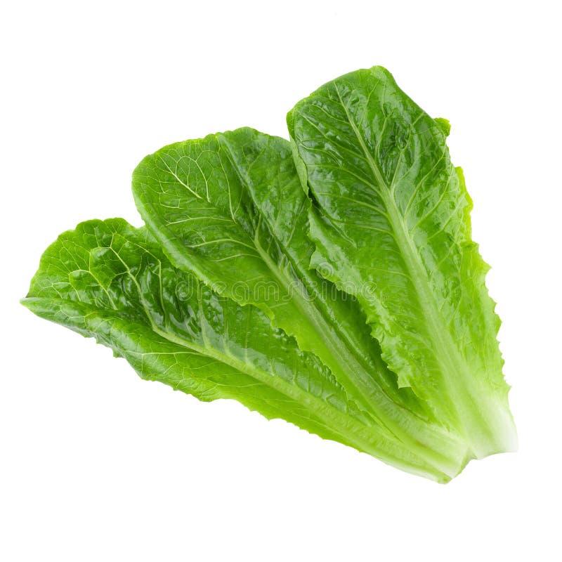 Cos Lettuce Isolated sobre um fundo branco imagens de stock