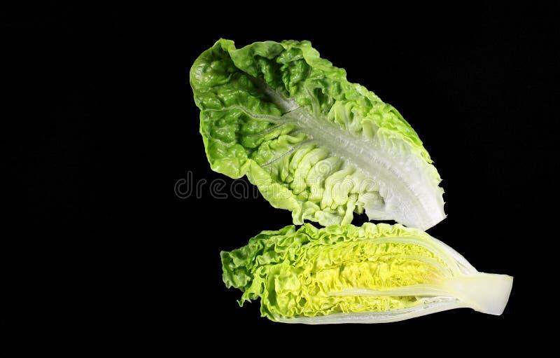 Cos Lettuce oder Romaine Lettuce lizenzfreie stockbilder