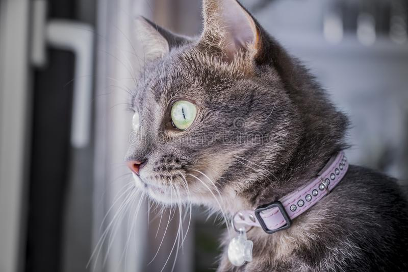 Cat with green eyes royalty free stock photography