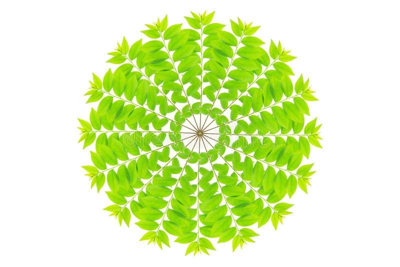 Cose вверх по зеленым лист дерева крыжовника звезды стоковая фотография rf