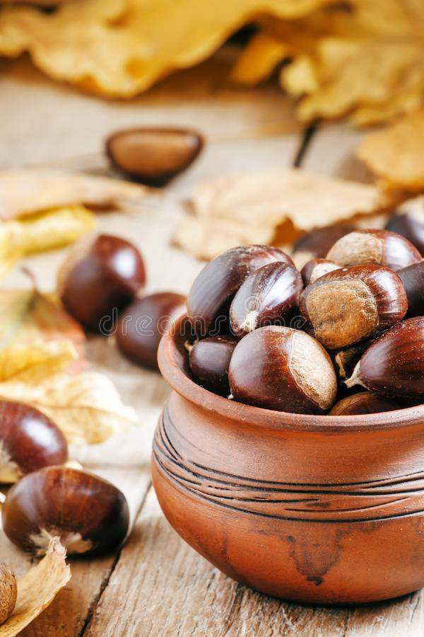 Cosecha comestible de la castaña en un pote de arcilla en el otoño con caído imagenes de archivo