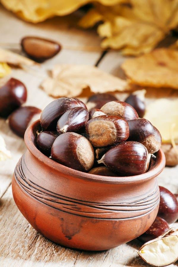 Cosecha comestible de la castaña en un pote de arcilla en el otoño con caído fotografía de archivo libre de regalías