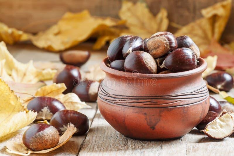 Cosecha comestible de la castaña en un pote de arcilla en el otoño con caído foto de archivo