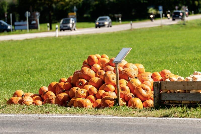 Cosecha de calabazas anaranjadas - Baviera Alemania imagen de archivo