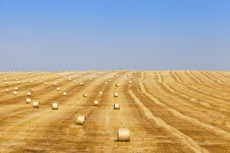 cosecha de cereales fotografía de archivo libre de regalías