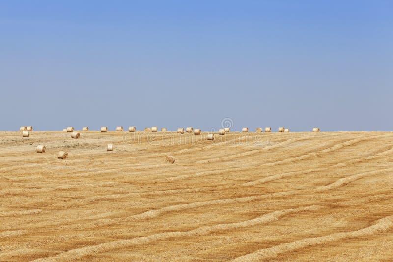 cosecha de cereales imagen de archivo