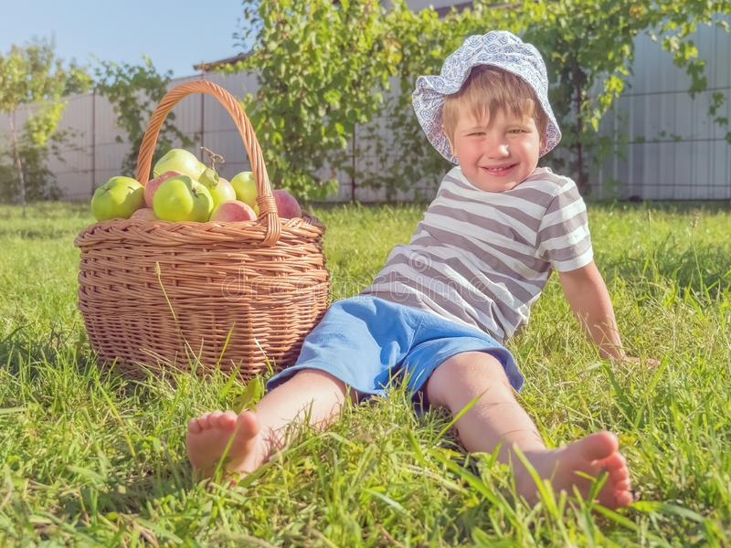 Cosecha de concepto Manzanas en cesta Cesta por completo de frutas Forma de vida rústica fotos de archivo libres de regalías
