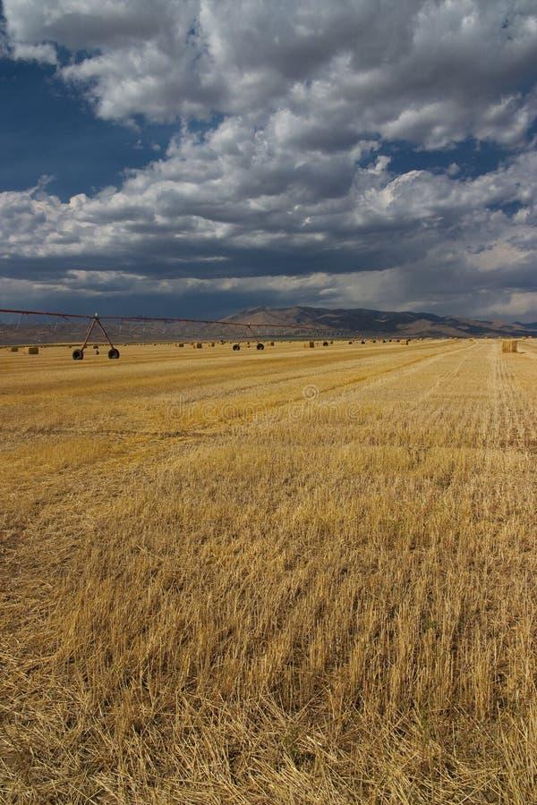 Cosecha de Idaho imagenes de archivo