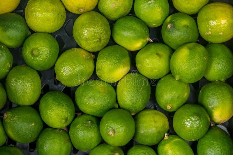 cosecha de la cal muchas cales del verde Fondo de la cal cales del ?rbol imagen de archivo