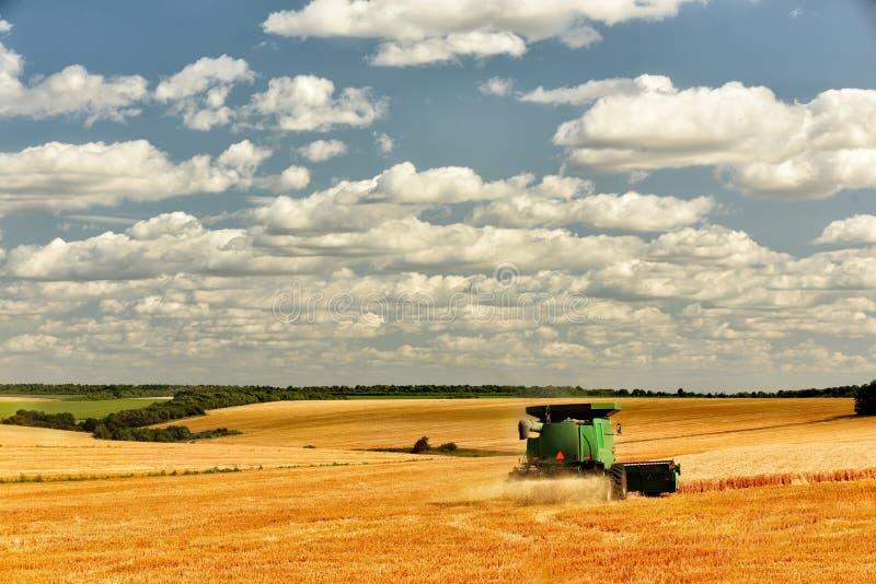 Cosecha de la cosechadora en el campo del trigo de oro Campo de oro con los oídos de cosechas de grano y de un cielo hermoso en l imagen de archivo libre de regalías