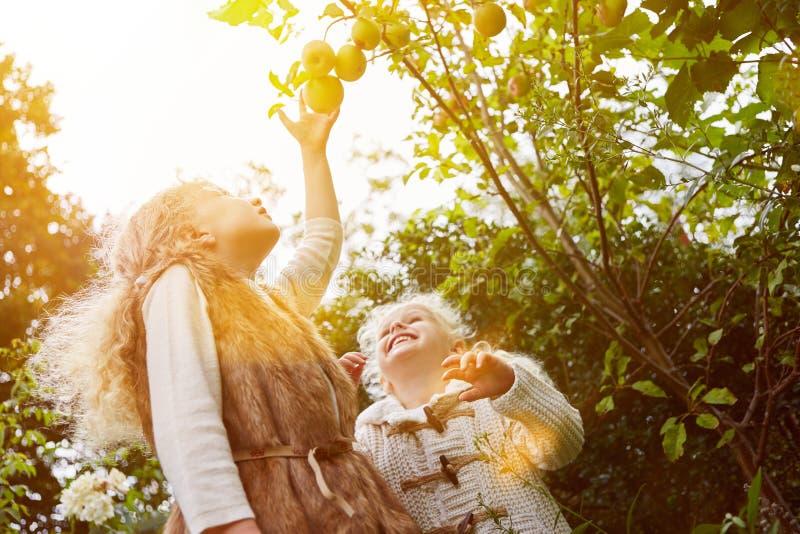 Cosecha de la manzana de dos niños foto de archivo