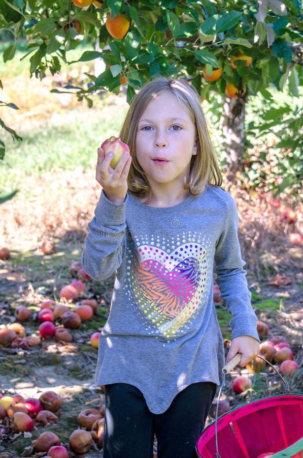 Cosecha de la niña y manzanas de la consumición fotografía de archivo libre de regalías