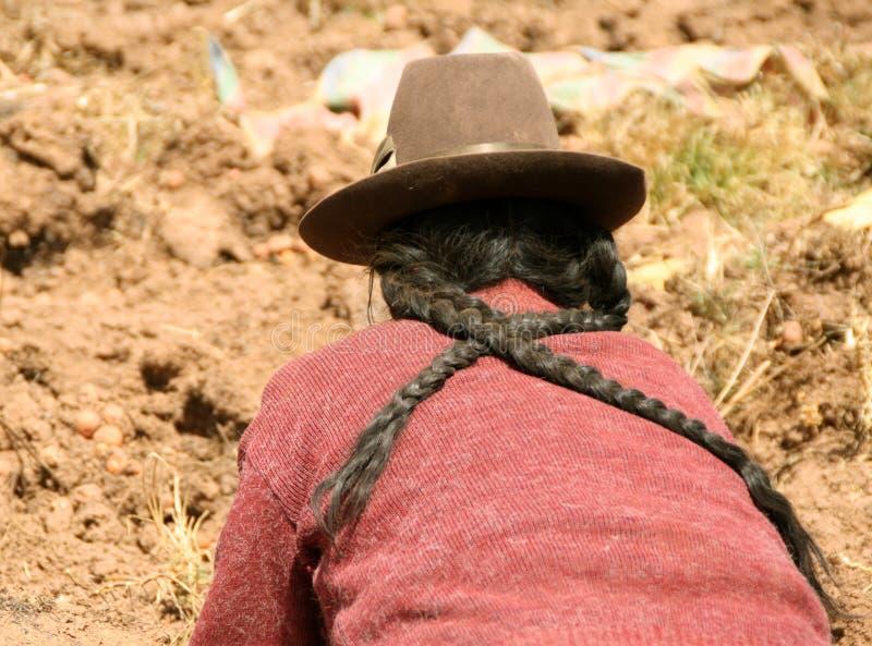 Cosecha de la patata en los Andes imagenes de archivo