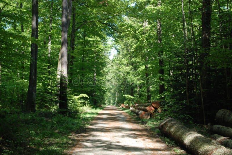 Cosecha de madera en el bosque negro fotos de archivo libres de regalías