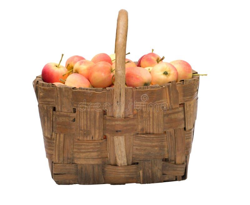 Cosecha de manzanas. fotos de archivo
