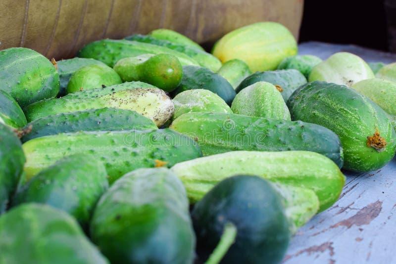 Cosecha de pepinos verdes frescos en banco en el jardín fotografía de archivo