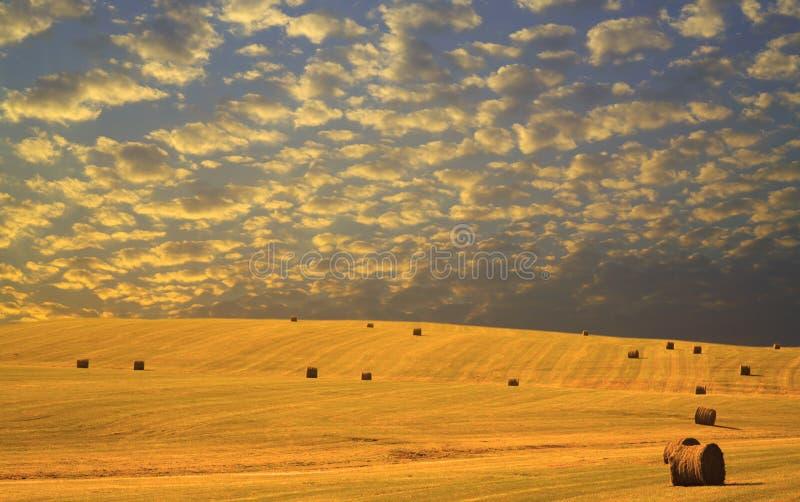 Cosecha del heno del otoño en la puesta del sol fotografía de archivo libre de regalías