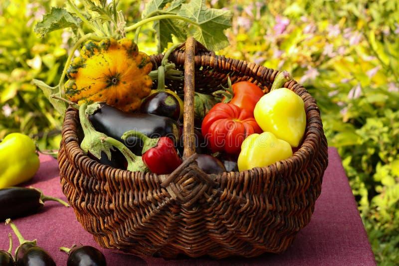 Cosecha del otoño de verduras en una cesta en el jardín fotos de archivo
