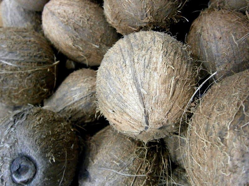 Cosecha entera melenuda hermosa fresca de los cocos imagen de archivo