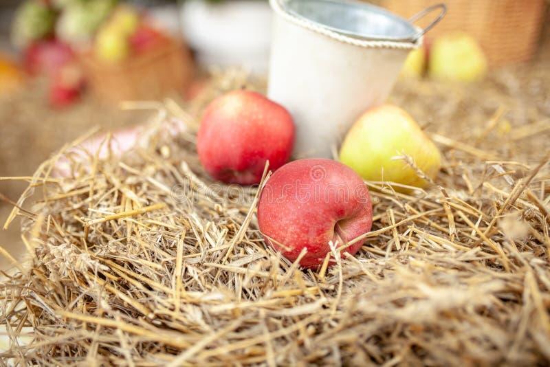 Cosecha fresca de manzanas Tema de la naturaleza con las uvas rojas y la cesta en fondo de la paja Concepto de la fruta de la nat imagen de archivo libre de regalías