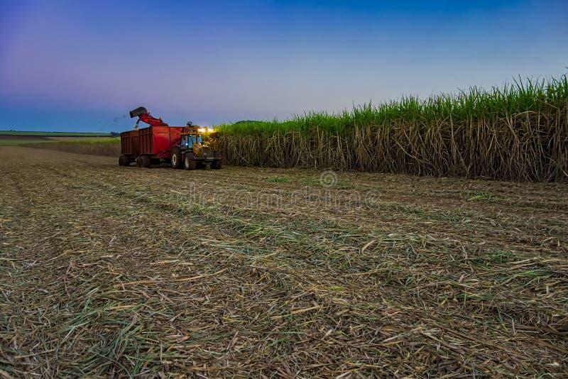 cosecha mecánica del campo de la caña de azúcar con una cosecha que lleva del tractor foto de archivo libre de regalías
