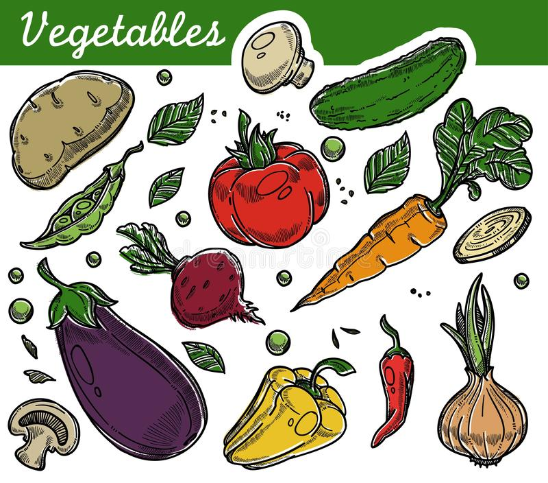 Cosecha vegetariana de la nutrición de la comida orgánica de la granja de las verduras libre illustration