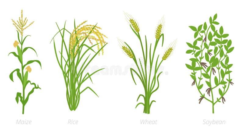 Cosechas agr?colas Rye, trigo del ma?z del arroz y planta de soja Ilustraci?n del vector Cereale del Secale Planta cultivada agri ilustración del vector