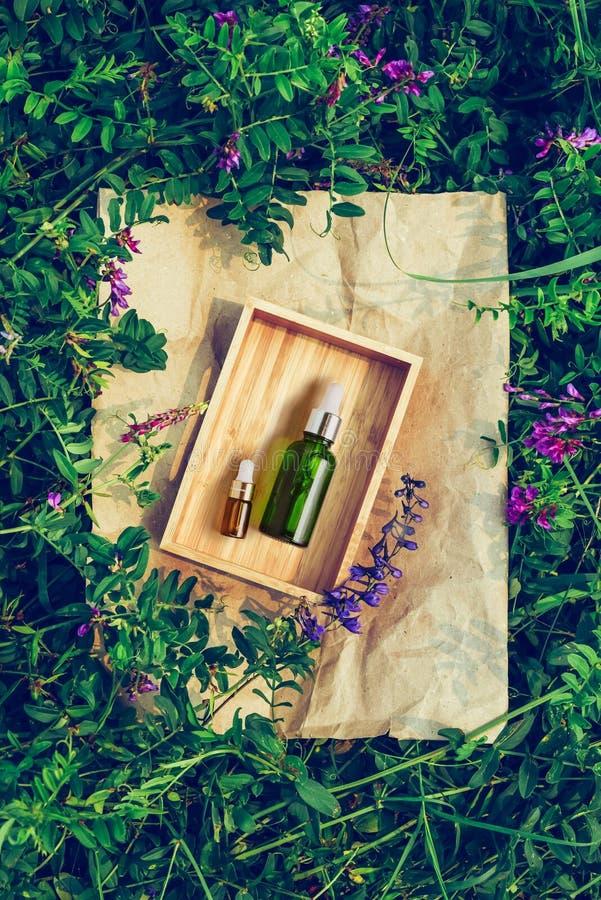 Cosmético orgânico dos termas com os ingredientes ervais para a pele Soro em uma garrafa de vidro transparente no fundo da planta foto de stock