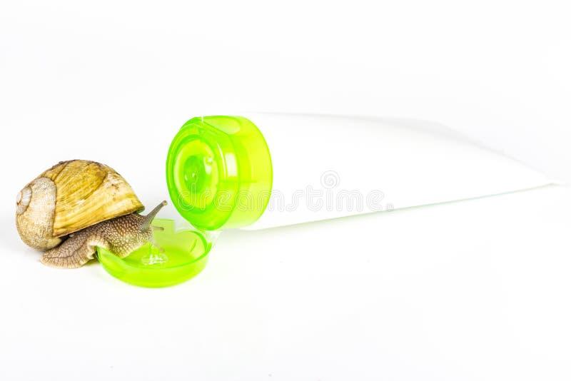 Cosméticos feitos com limo do caracol Produtos muito saudáveis e orgânicos imagem de stock