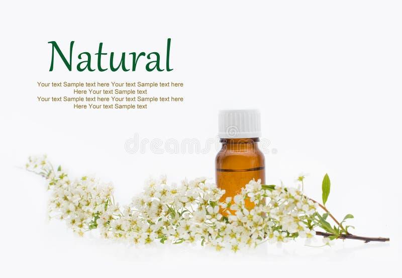 Cosméticos naturais, óleo, erval - medicina alternativa fotos de stock