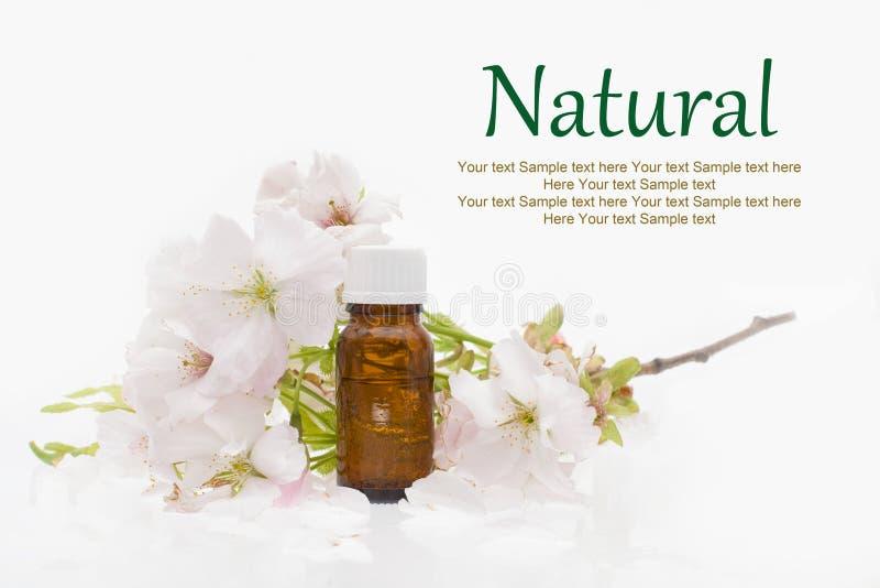Cosméticos naturais - ervais, óleo fotos de stock