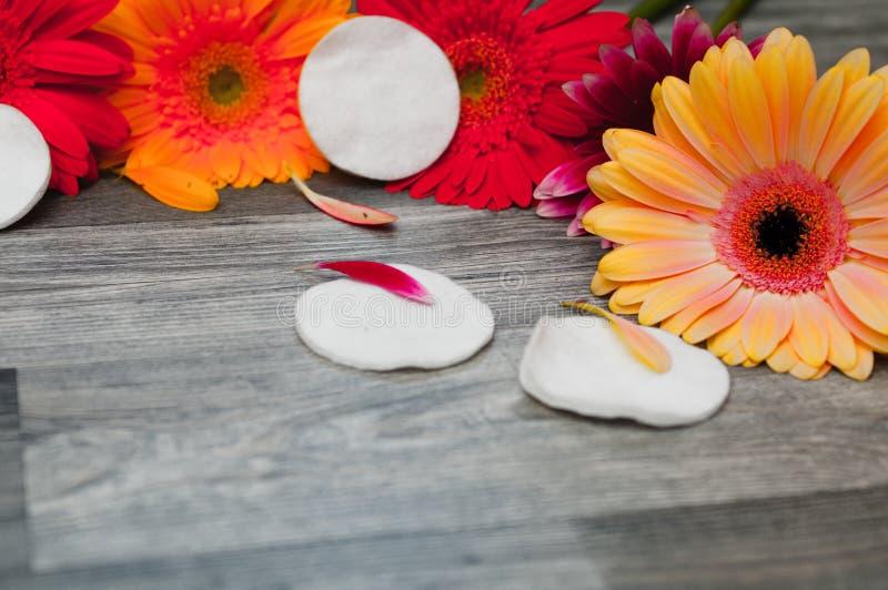 Cosméticos naturales con los ingredientes herbarios, primer y de las herramientas del cuidado de la piel y del cuerpo: aceite del foto de archivo libre de regalías