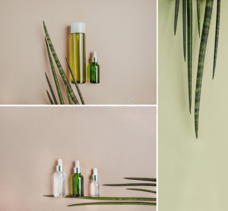 Cosméticos orgânicos, naturais, soro para cuidados capilares Configuração lisa, pastel Bandeira da foto da coleção foto de stock