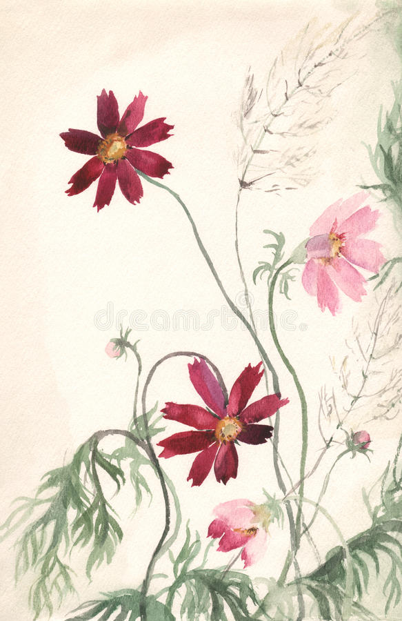 Free Cosmea Watercolor Painting Royalty Free Stock Photos - 11360408