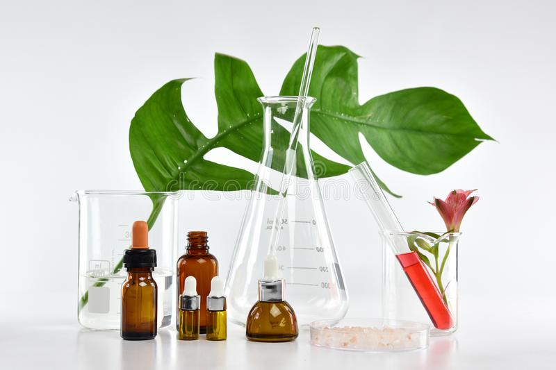 Cosmetic bottle containers with green herbal leaves and scientific glassware, Blank label package for branding mock-up, Research a. Nd develop natural organic stock photos