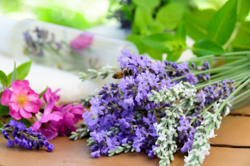 Cosmetici naturali con le erbe fotografia stock