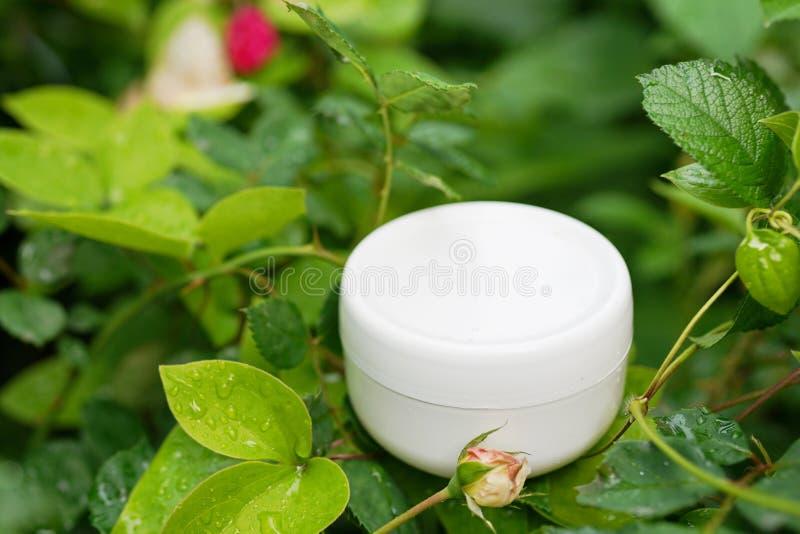 Cosmetico naturale della maschera dei capelli sulle foglie verdi della natura modello, prodotti per i capelli di vista superiore  immagine stock libera da diritti