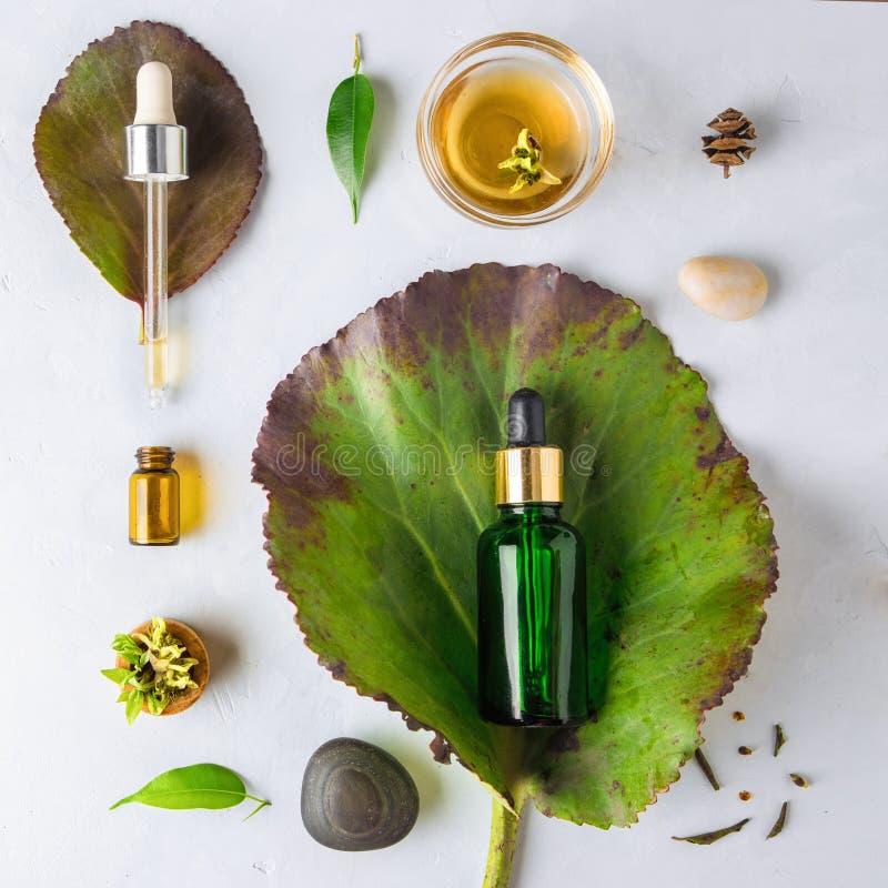 Cosmetico organico della stazione termale con gli ingredienti di erbe Siero di verdure per pelle con gli estratti di erbe bottigl immagine stock libera da diritti