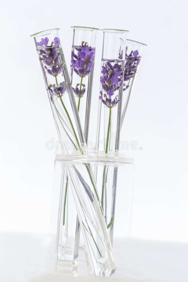 Cosmetology lab Lavender Flowers in test tubes royalty free stock images