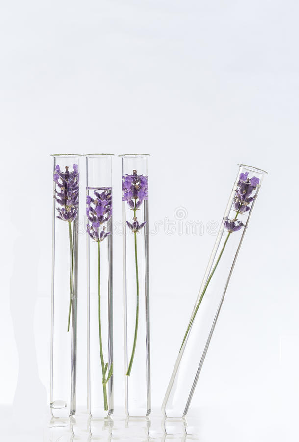 Cosmetology lab Lavender Flowers in test tubes stock images