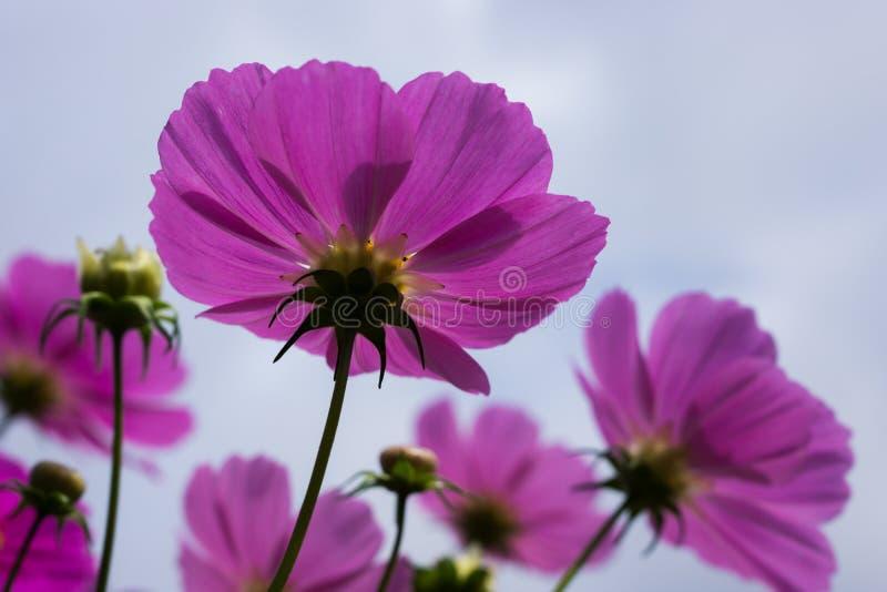 Cosmo i pszczoła obraz stock