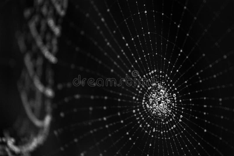 Cosmos fotos de archivo