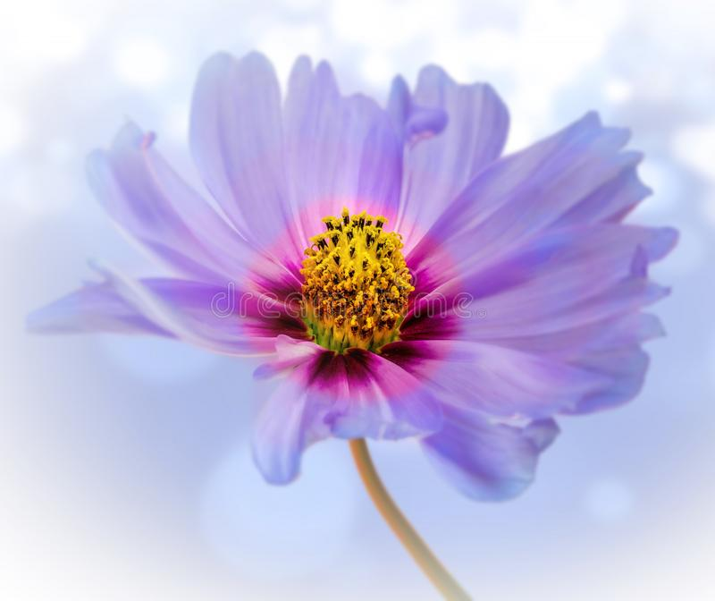 Cosmos azul difuso imágenes de archivo libres de regalías